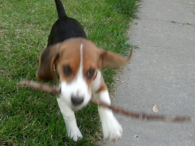 buster_stick