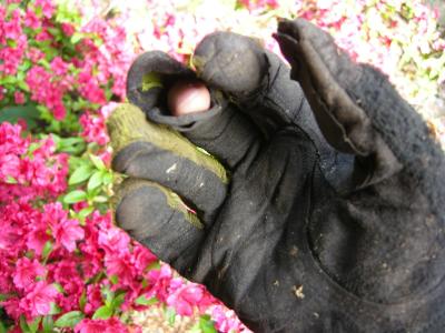 gardeningglove