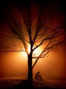prayer_tree