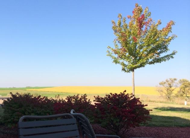 patio at broom tree