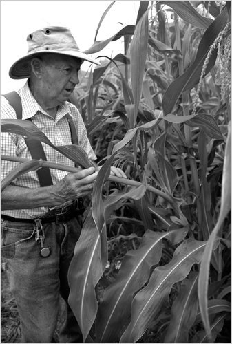 corn farmer bw